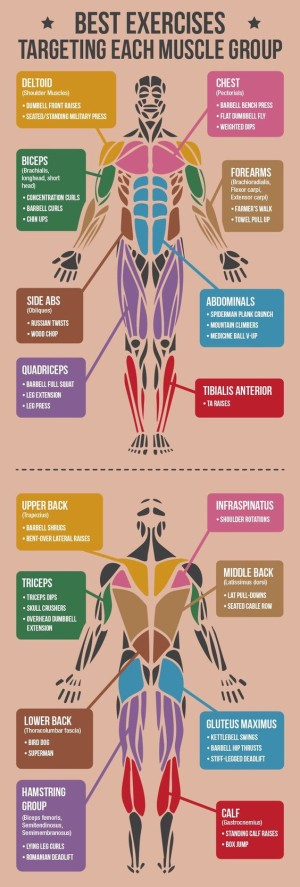 exercisebodyparts